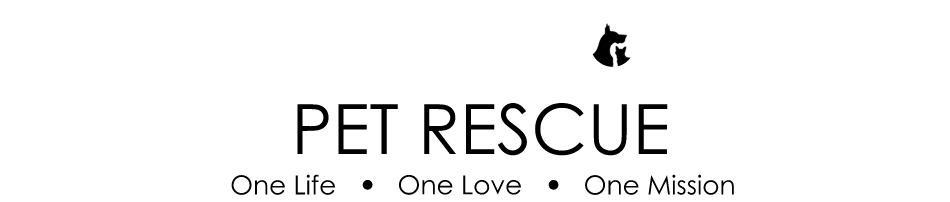 The Place To Practice Reading with Dogs From All For One Pet Rescue