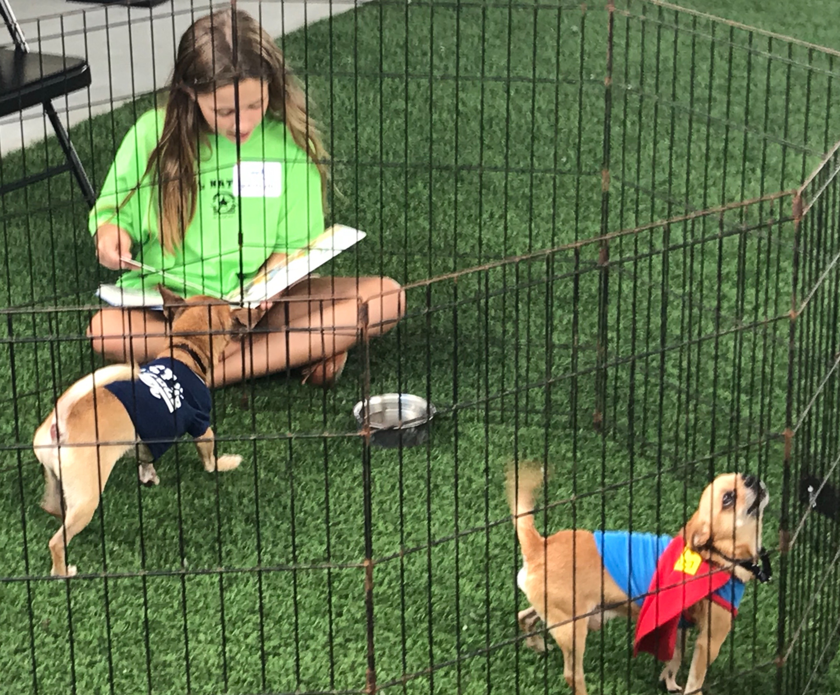 Reading To A Dog At Big Dog Ranch Rescue West Palm Beach